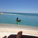 130x130 sq 1365181681725 secrets marquis los cabos pelican