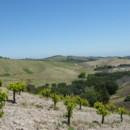 130x130 sq 1383657537920 vineyard tour 542 baile