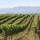 130x130 sq 1383657567813 winery v
