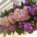 130x130 sq 1357174638298 flower4
