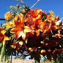 130x130_sq_1357174642845-flower8