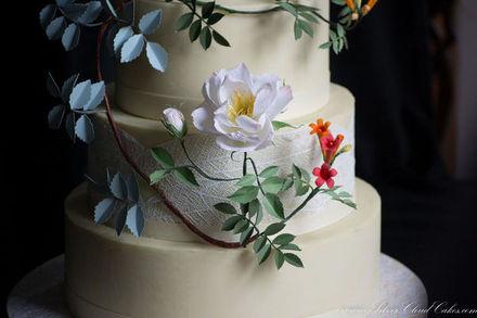 Massachusetts Wedding Cakes Reviews for 88 Cakes