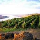 130x130_sq_1358958458385-vineyard