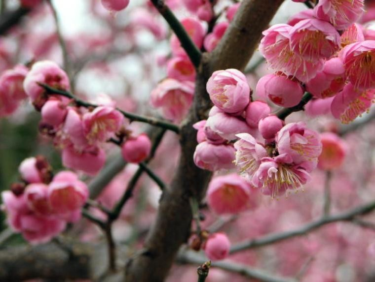 Plum Blossom Music Ceremony Music Charlottesville Va