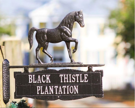 Black Thistle Plantation
