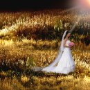 130x130 sq 1354903535286 goldengrassaflare
