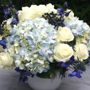 130x130 sq 1323109260758 bluehydrangeas2