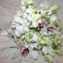 130x130 sq 1355784239001 dendrobriumcymbidiumorchids