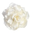 Duchess 45  <br /> White Silk Flower Hair Accessory