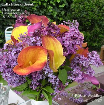photo 9 of Pacific Callas
