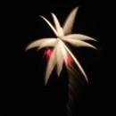130x130 sq 1367256446004 fireworks3