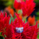 130x130 sq 1418408583716 zokah nadia  tarik wedding for social media 552