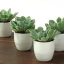 130x130 sq 1468944395699 succulentsakefavorrgb