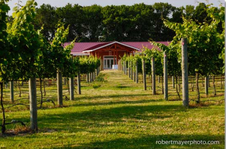 Willow Creek Winery