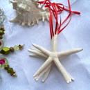 Starfish Christmas Ornament. A