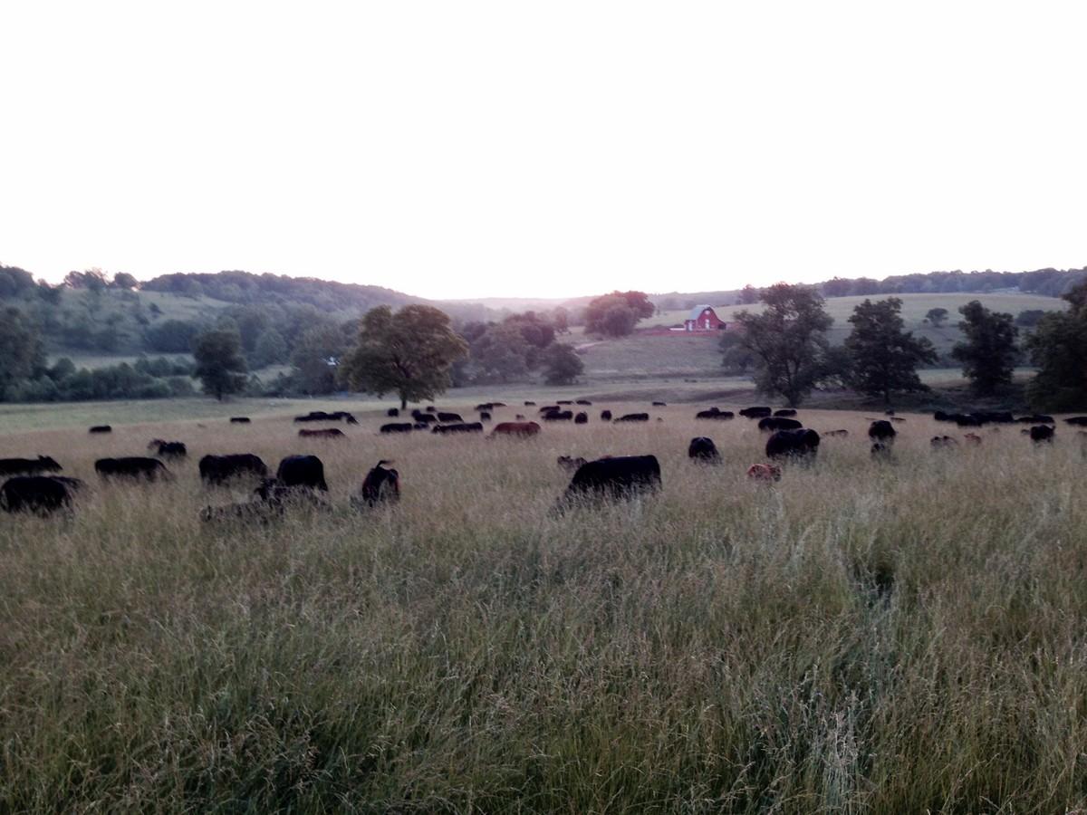 Hope Springs Farm Venue Hartville Mo Weddingwire