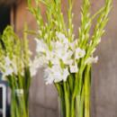 Floral Designer:Perfect Petal