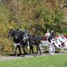 JK Percherons - Horse Drawn Carriage Service image