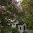 130x130 sq 1397500710673 robertson   sh behind lilacs