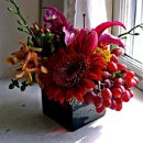 130x130_sq_1247240483435-grapesforbloombergmedium