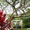 Venue: Moloa'a Shangri-La  Event Planner:Alohana Weddings  Groom and Groomsmen Attire: Tommy Hilfiger  Floral Designer: Davine Blooms
