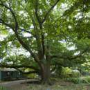 130x130_sq_1373325404375-english-oak