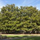 130x130 sq 1374700176835 magc 374 1011 magnolia