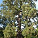 130x130_sq_1374700189994-magc-274-1011-lo-res-4x6-sequoia