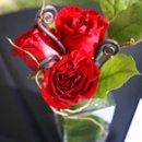130x130 sq 1216167046697 rosesmonkey