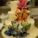 130x130 sq 1342367354185 butterflycascade2.jpg