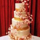 130x130_sq_1264617377985-cherryblossomcake