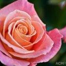 130x130_sq_1351107017654-importflowers