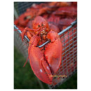 130x130 sq 1415891826330 powell wedding lobster   maaike bernstrom photogra