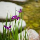 130x130 sq 1446566571015 yasuhiro fujiki   garden beauty shot   april 21 20