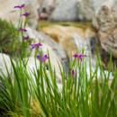 130x130 sq 1446566660536 yasuhiro fujiki   garden beauty shot   april 21 20