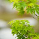 130x130 sq 1446566712217 yasuhiro fujiki   garden beauty shot   april 21 20