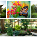 130x130 sq 1471298989132 butterfly house collage