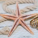 130x130 sq 1428009975808 margaret bonnie rings starfish