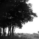 130x130 sq 1370379592414 black and white trees