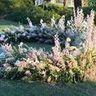 Scarlett Begonia Florals LLC image