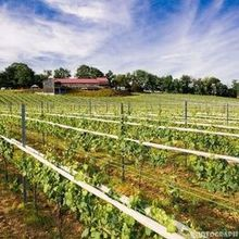 220x220 sq 1531704812 18624d4a0589d071 1531704810 faf66f3f264416b2 1531704795638 7 vineyard at grandv