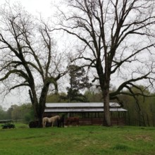 220x220 sq 1433551754729 horses wood barn
