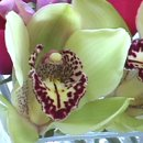 130x130 sq 1235615453620 orchid2