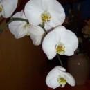 130x130_sq_1374538305992-eygpt-me-flowers-044