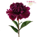 130x130 sq 1413915581529 red peony   single stem
