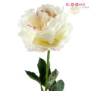 130x130 sq 1413915584683 white peony   single stem
