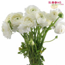 130x130 sq 1413915983412 bunch of white ranunculus