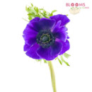 130x130 sq 1413916439538 purple anemone