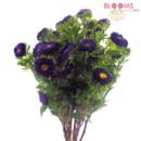 130x130 sq 1413916525959 matsumato aster purple