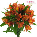 130x130 sq 1413916544390 orange alstroemeria